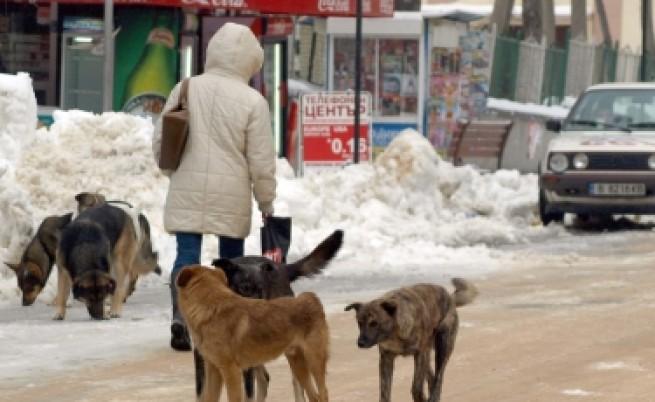 Средно по 110 бездомни кучета на седмица се залавят в София