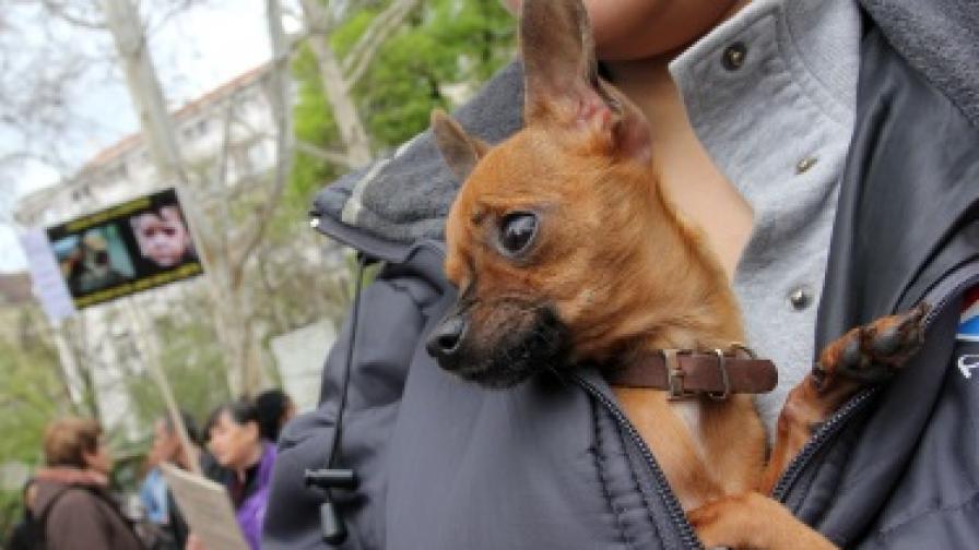 Нови проверки за регистрация на домашните кучета
