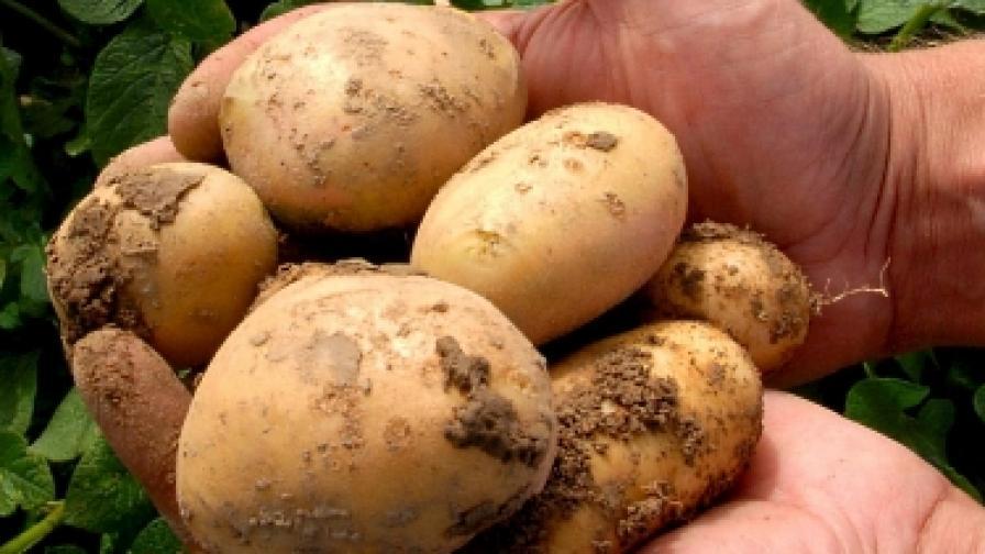 Картофът - подценената суперхрана