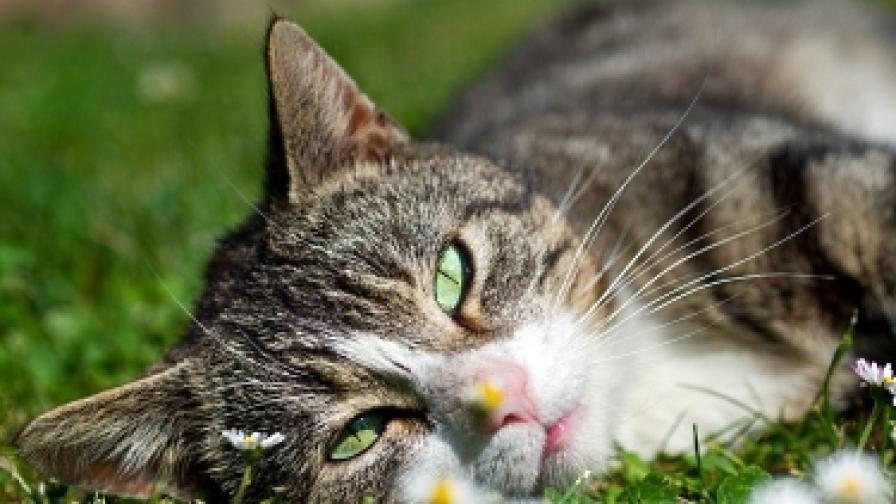 Семейство предлага 5000 долара за изчезнала котка