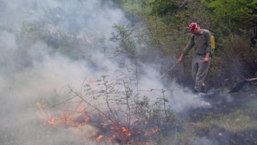 Локализираха пожара в Хасковско