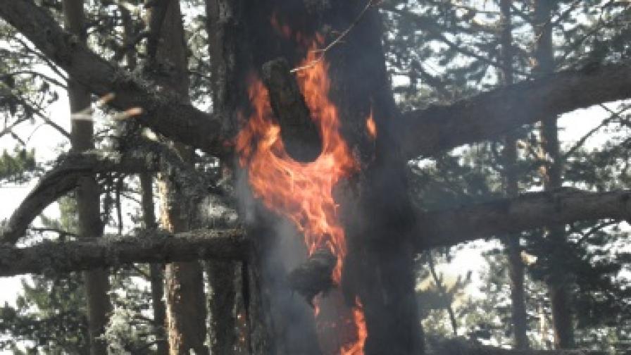 Задържаха причинителя на пожара между Несебър и Поморие
