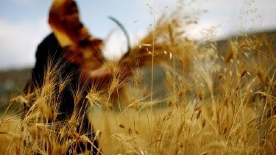 """""""Зелените"""": Държавните земеделски търгове са нагласени"""