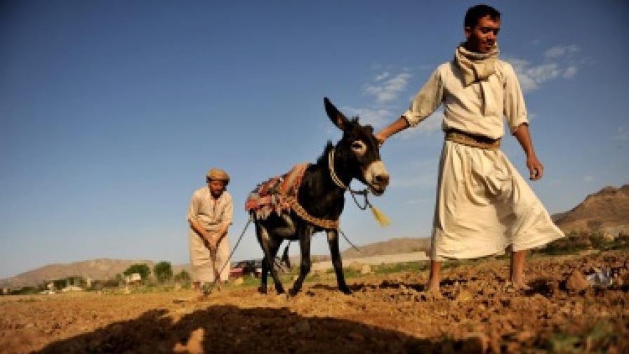 ООН: Броят на гладуващите по света е неприемлив