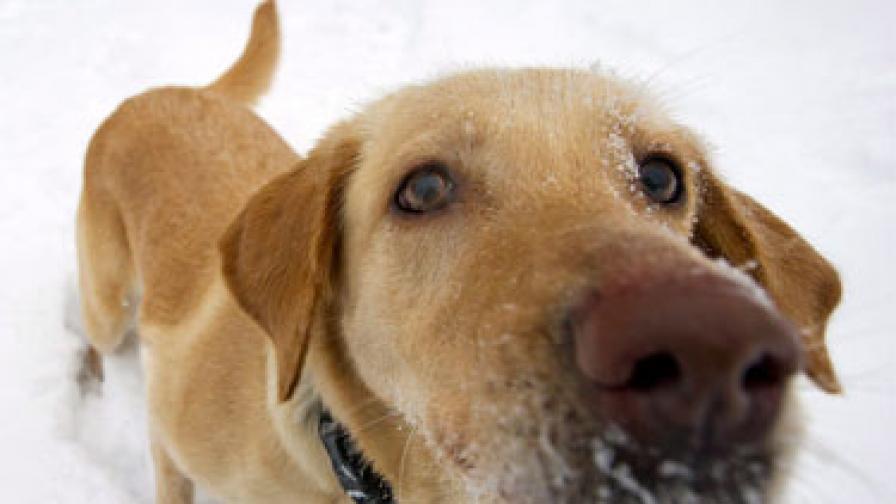 Куче лекува деца в рехабилитационен център