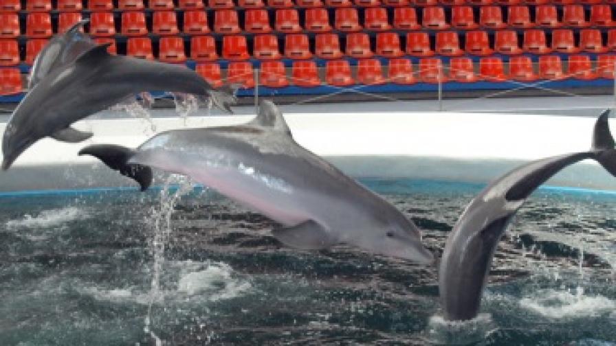 Бургас може да се сдобие с океанариум
