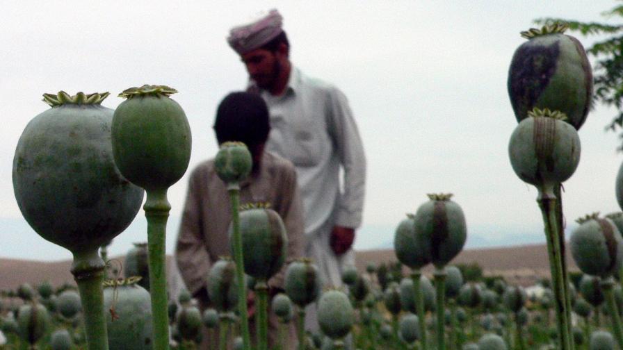 В Афганистан се произвеждат 90% от световното количество опиум
