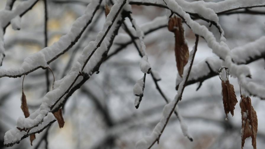 Сняг и виелица затвориха пътя Варна-Добрич