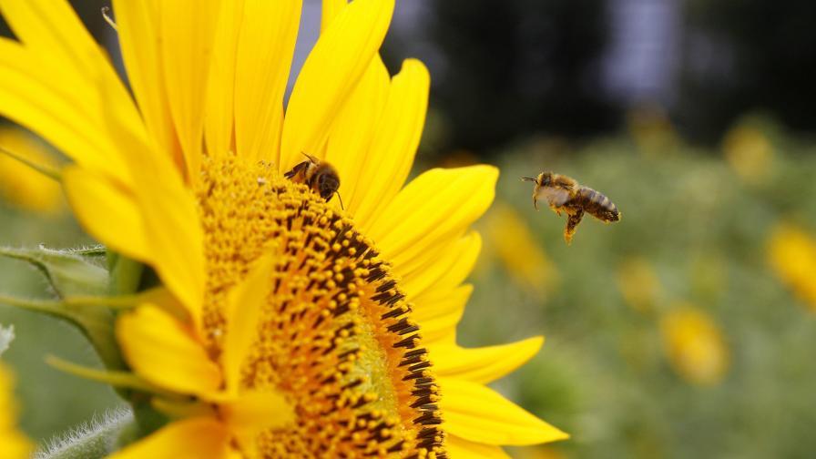 Италия: Сладкари с проблеми заради български мед