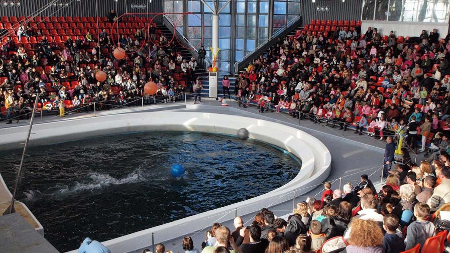 Руска фирма е кандидат да строи океанариум в Бургас