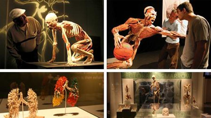 """Изложбата """"Човешкото тяло - разкрито и реално"""""""