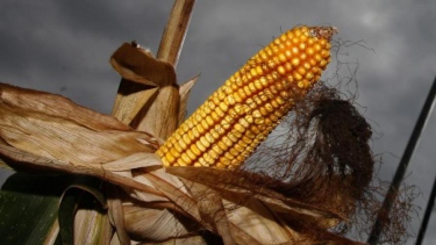 Българи отново на протест срещу ГМО в храните