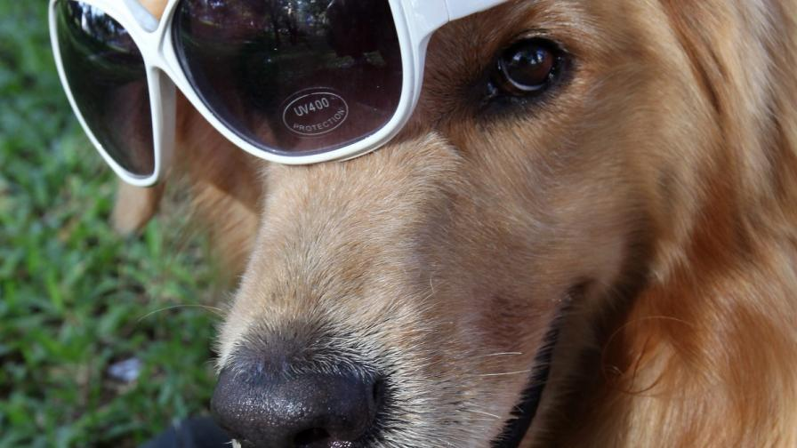 Фекалии по пощата за непослушни стопани на кучета