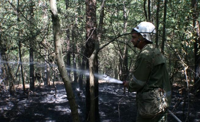 Гори борова гора близо до село Змейово., Пожарът се е разпрострял на площ 200 дка, 40 от тях - борова гора. Към мястото са изпратени противопожарни екипи от Стара Загора, Казанлък и Гурково