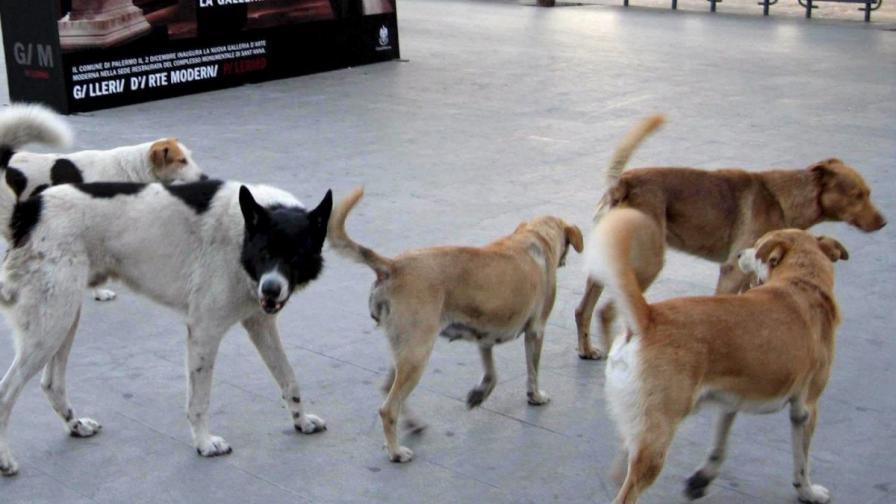 Проблемът с уличните кучета в Букурещ - отново в центъра на вниманието