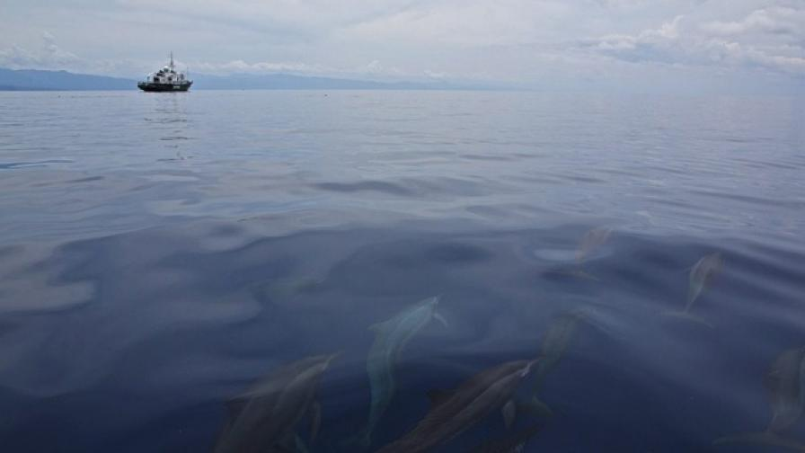 Обучени делфини ще откриват мини в Хърватия
