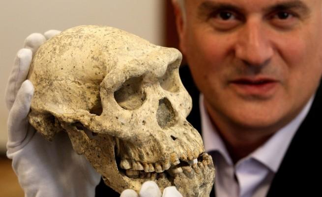Череп на 2 млн. години обръща идеите за еволюцията