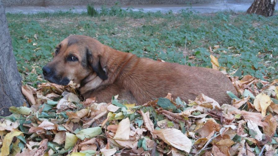 Намериха 7 мъртви кучета на централна улица в Силистра