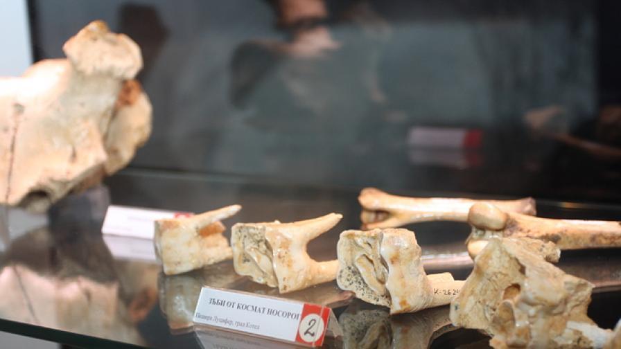 Откриха бедрена кост с най-старата ДНК в света