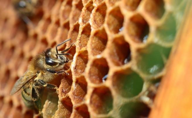 """Чудото с пчелите на """"Нотр Дам"""""""