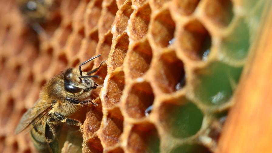 <p>Чудото с пчелите на &bdquo;Нотр Дам&rdquo;</p>